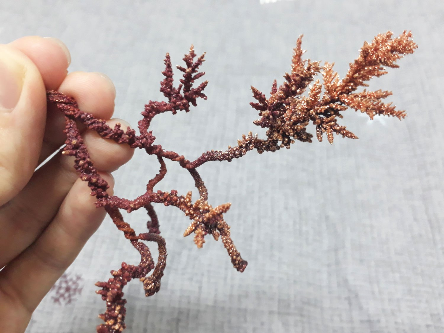 A tree of copper crystals grown electrochemically